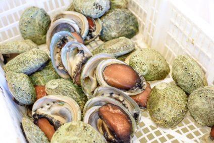 Abaloni: cosa sono, dove trovarli e prezzi