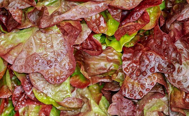 Perchè è importante lavare il cibo con i battericidi?