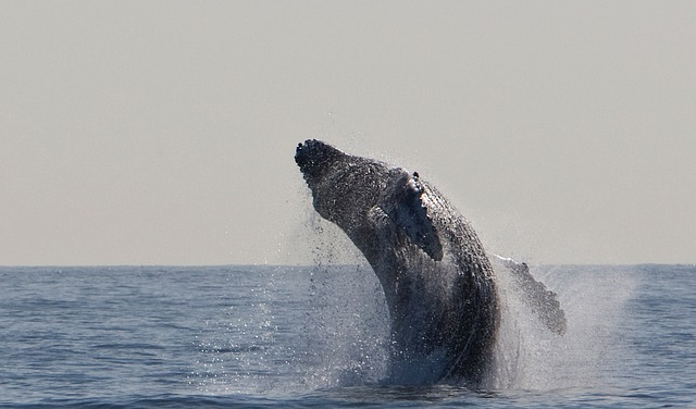 Il cetaceo antenato di balene e delfini con 4 zampe