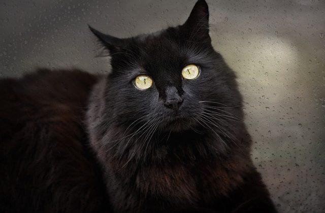 Gatto nero: significato nei sogni e superstizioni
